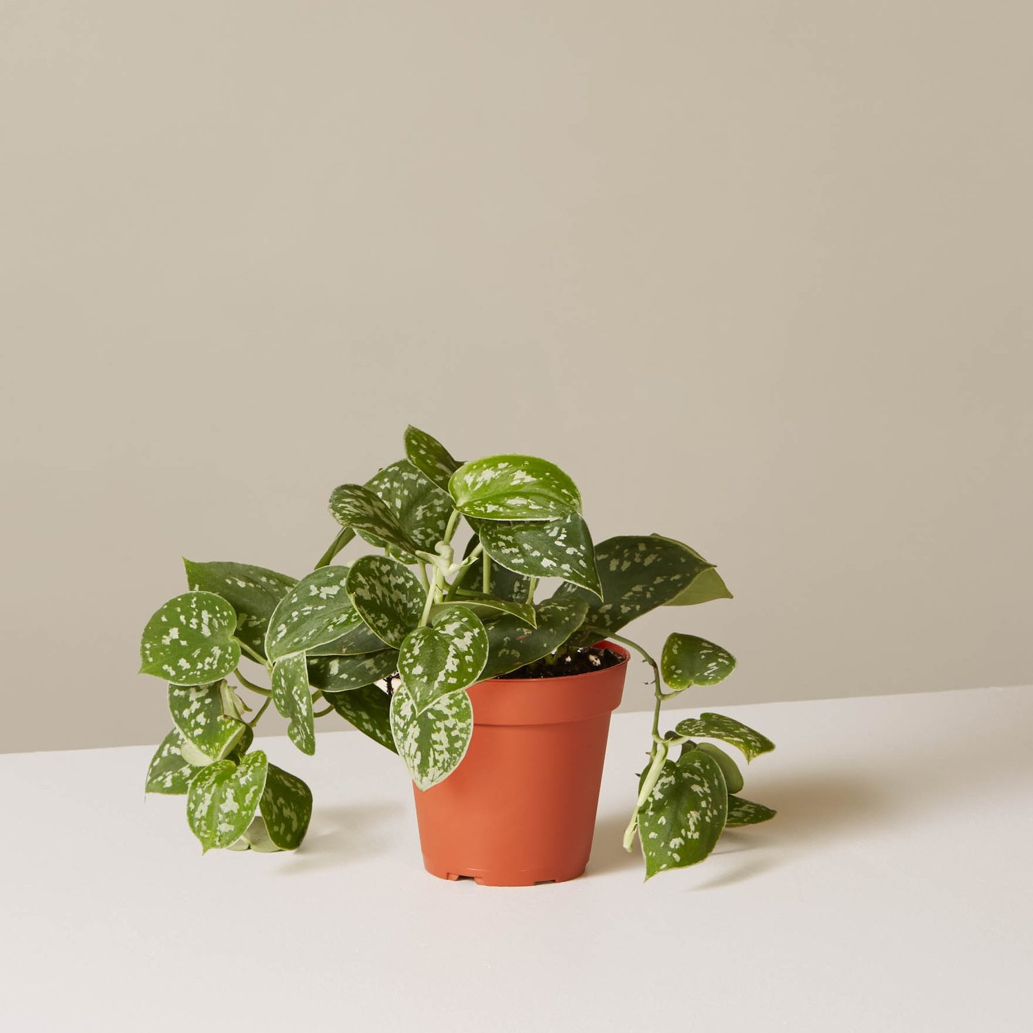 A house plant she'll love - Ditch the cut flowers and give your mom a plant that will last for more than a week. House plants are all the rage right now and there are a ton of them that aren't too high maintenance. Personally, we're obsessed with philodendrons.