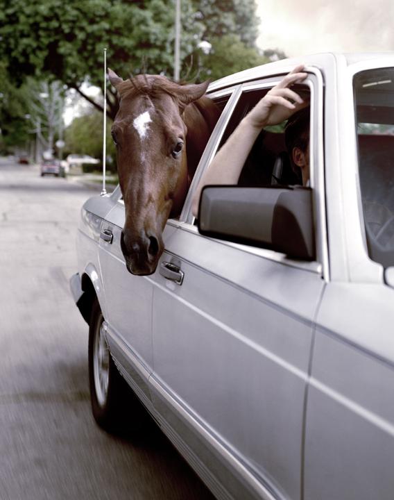 A.WIENERSCHNITZEL DRIVING HORSE.jpg