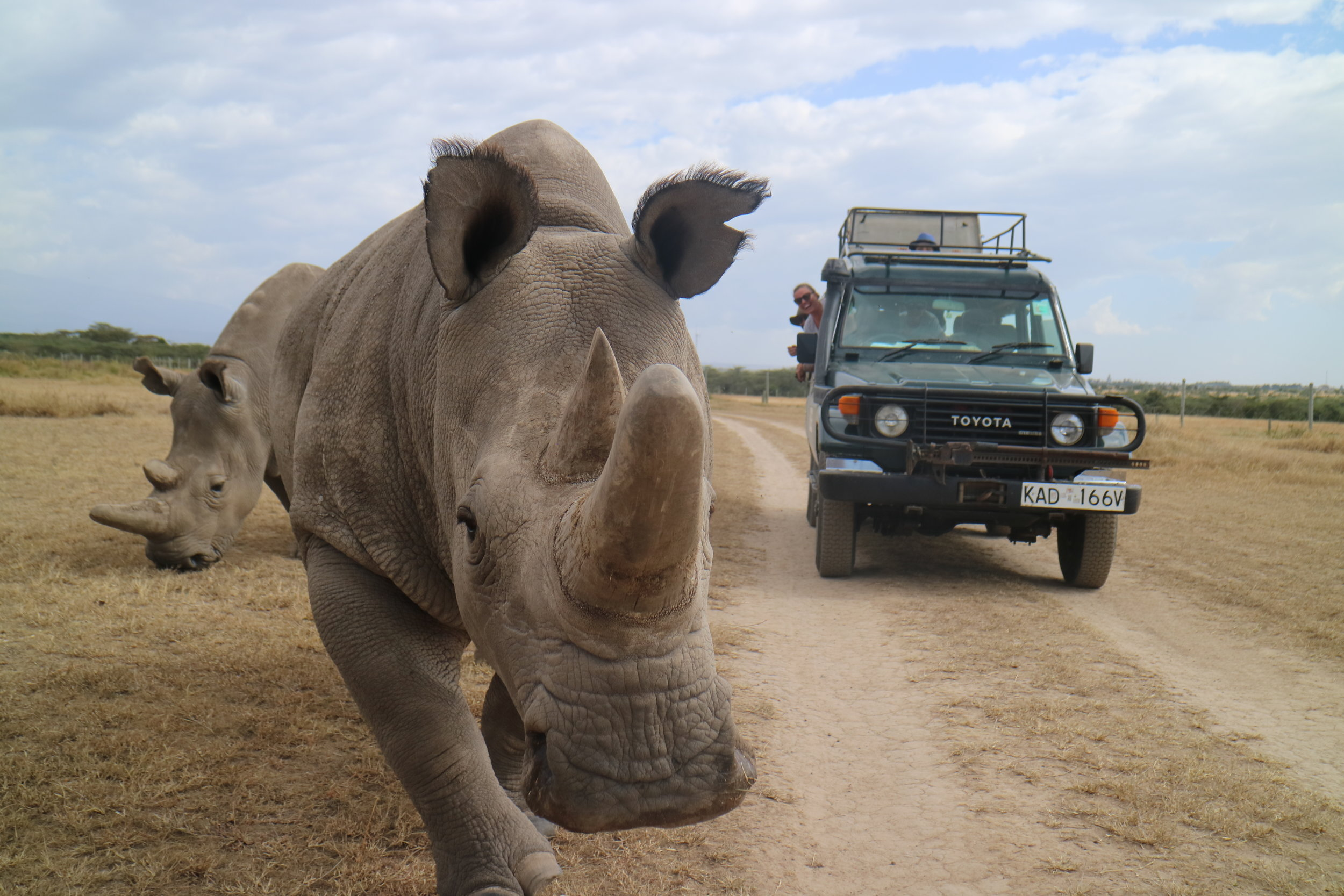 Witnessing the last two Northern White Rhino's in the world