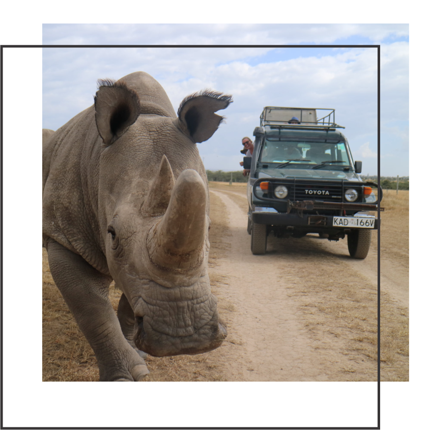 LEARNING ABOUT CONSERVATION FROM KENYA AT OL PEJETA - I was lucky enough to visit Ol Pejeta Conservancy and learn about how their saving wildlife and the world.READ MORE