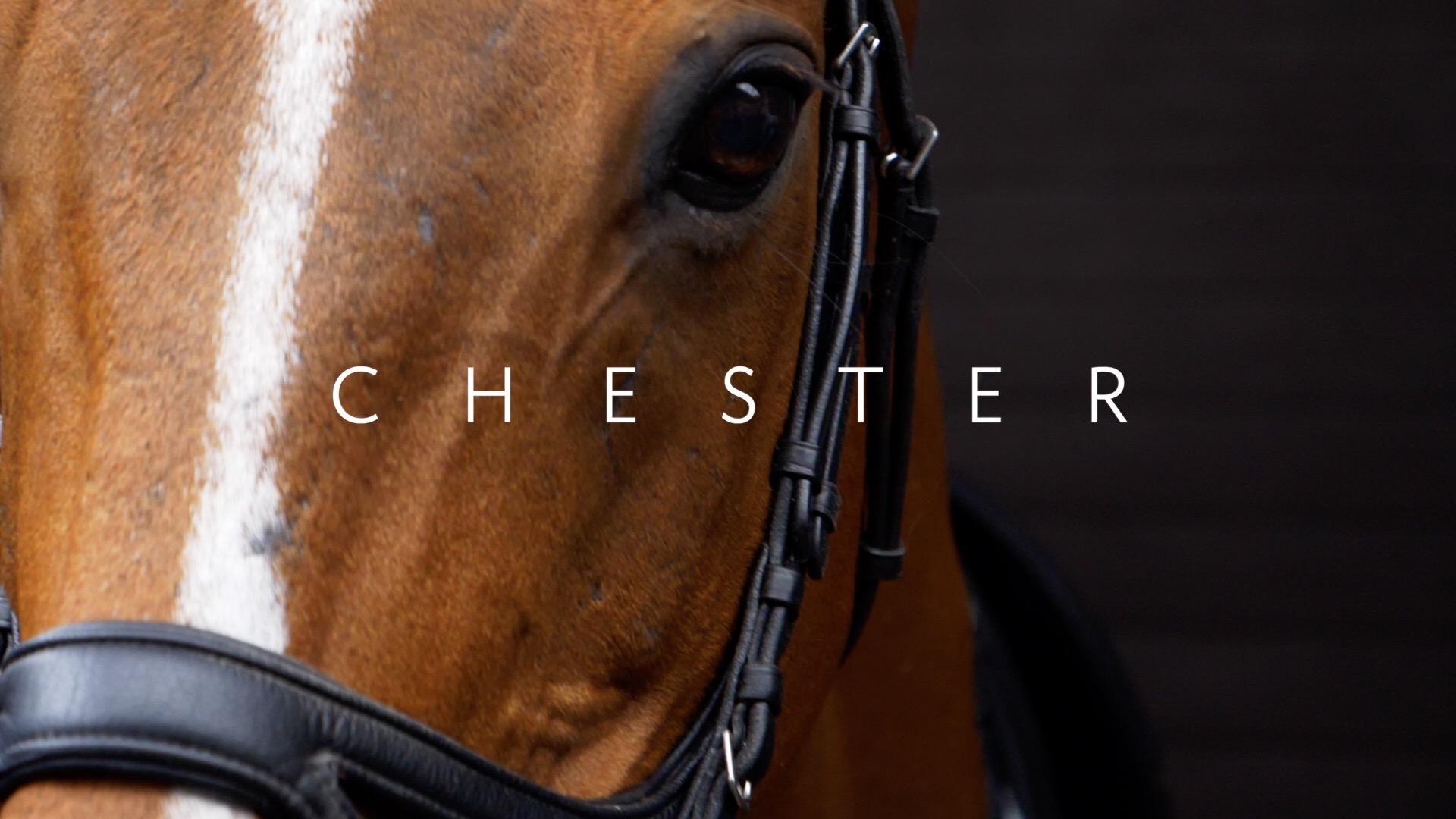 Filming Horses in Essex Video.jpg