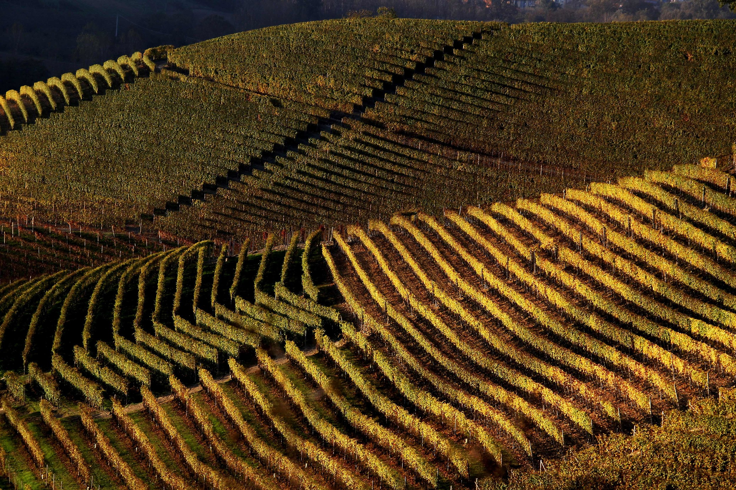 barolo wine tasting vineyard tour