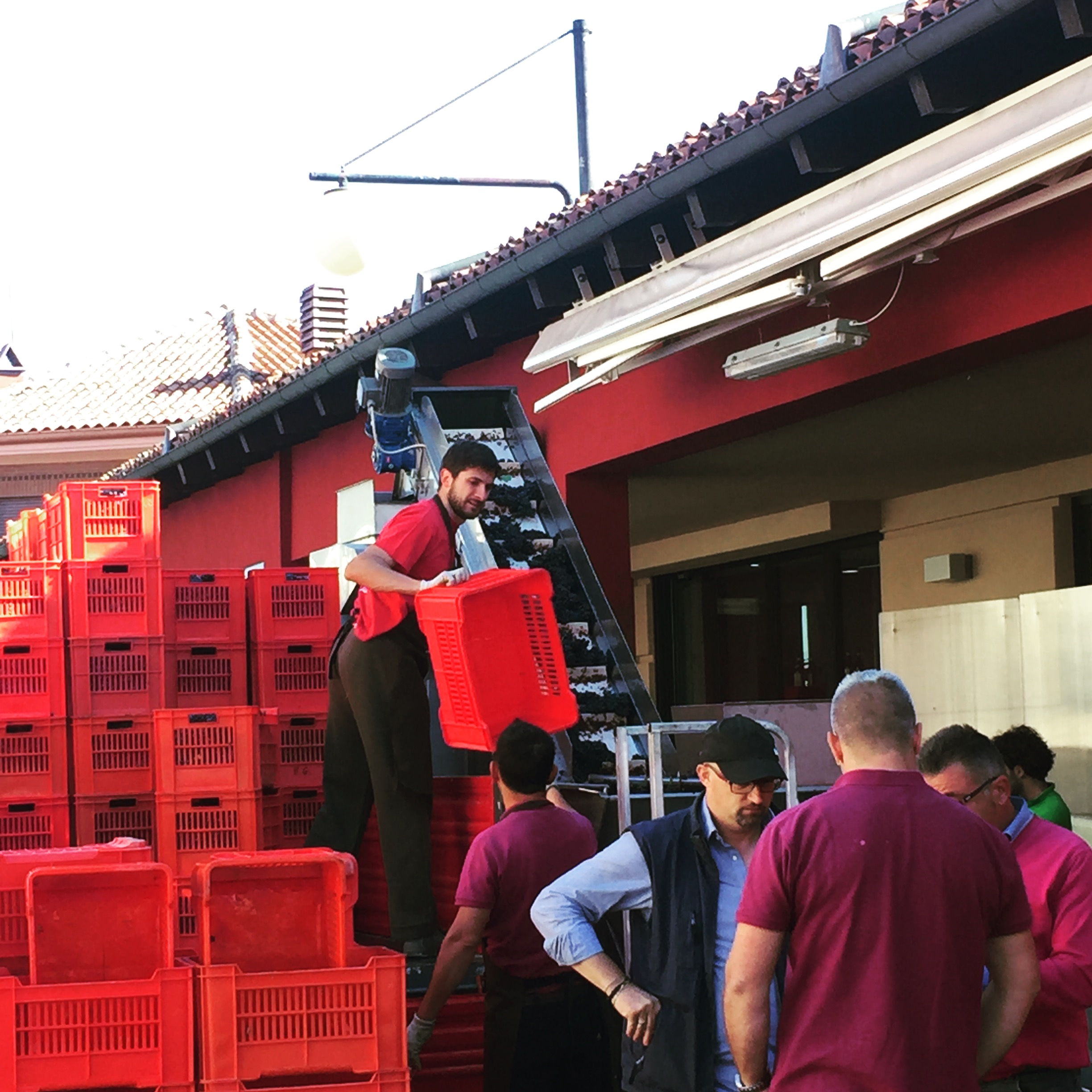 Barbaresco Harvest
