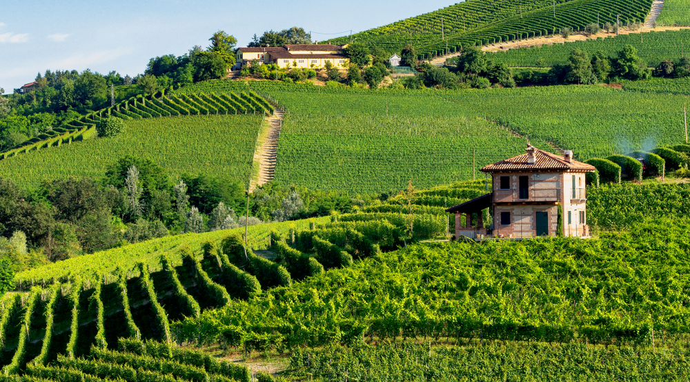 Summer, intense greens - The best time to come is early summer, when the rolling hills are in different deep shades of green. Here hiking, picnicking in the vineyards is an optimal idea, with a bottle of crisp and cool Arneis, you cannot go wrong.