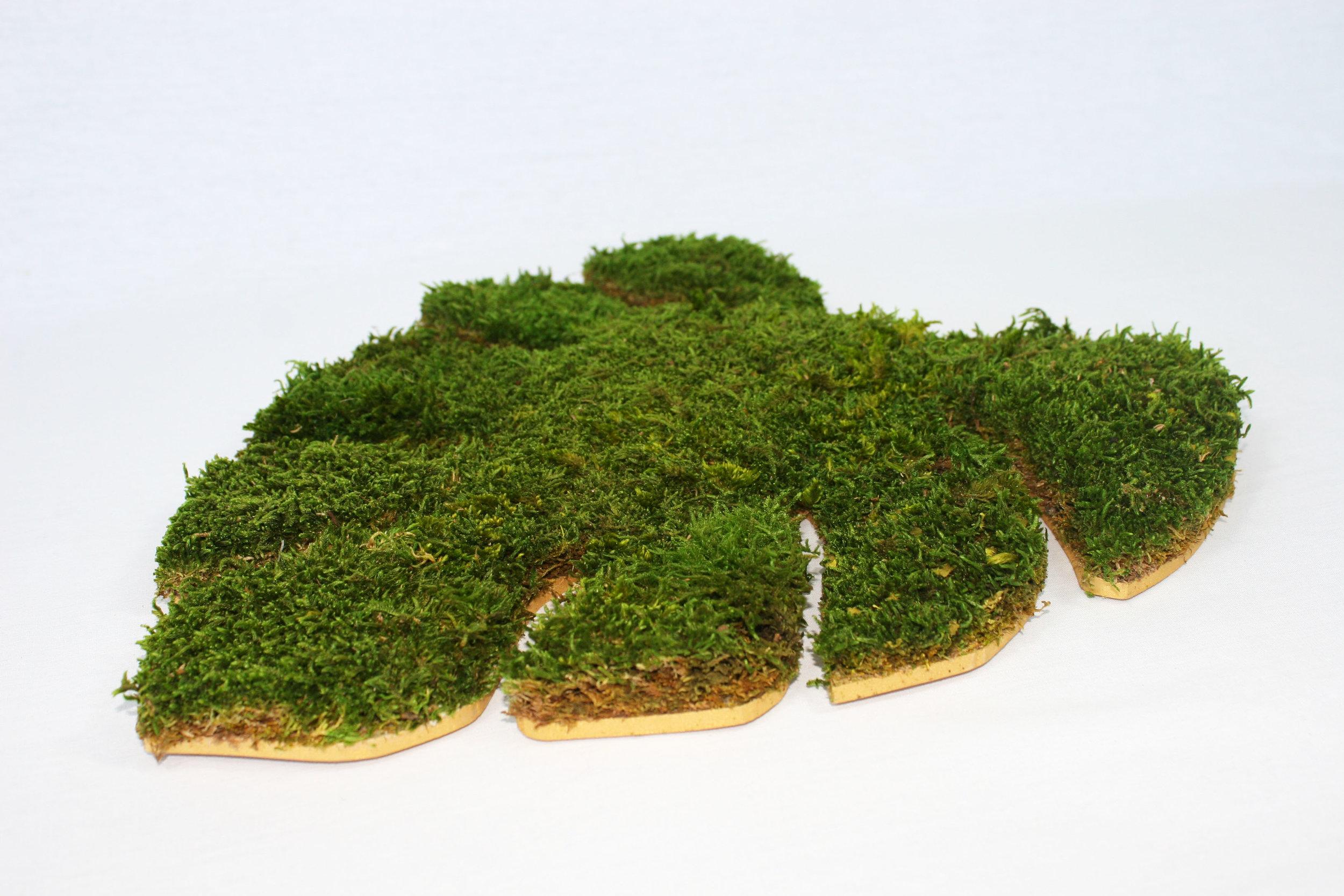 tableau-vegetal-monstera-bois-zoom.JPG