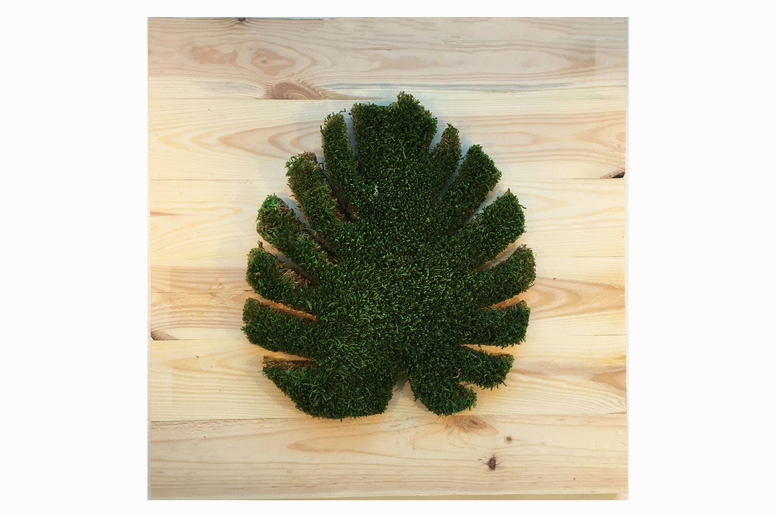 cadre-vegetal-monstera-planche-hoai 2.jpg