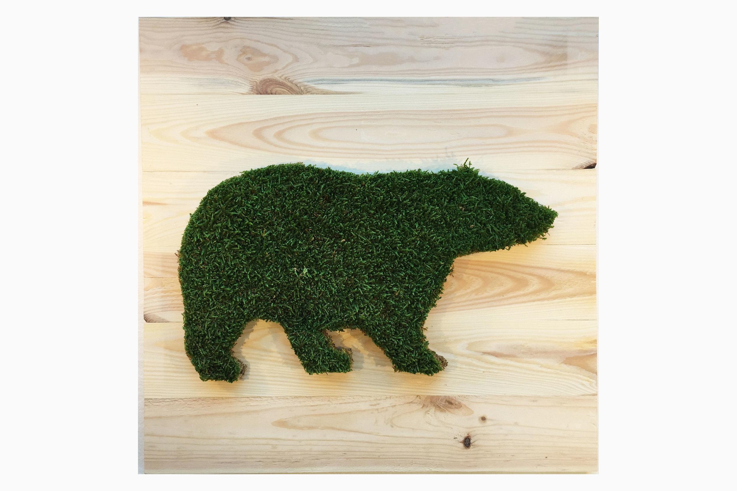 cadre-vegetal-bear-planche-hoai 2.jpg