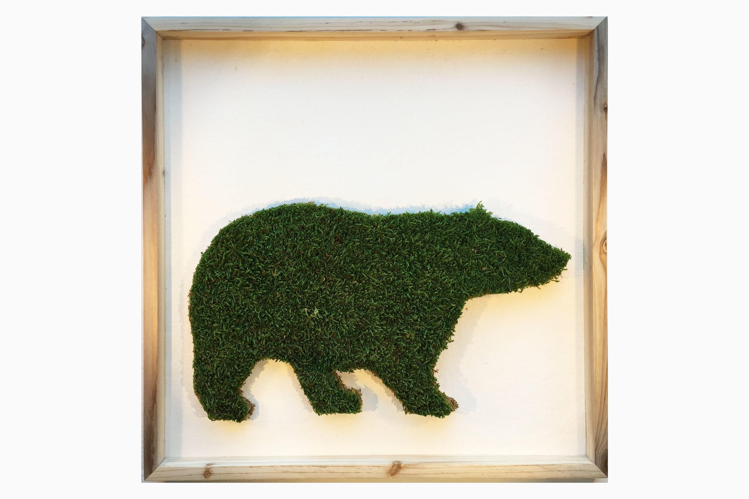 cadre-vegetal-bear-hoai.jpg