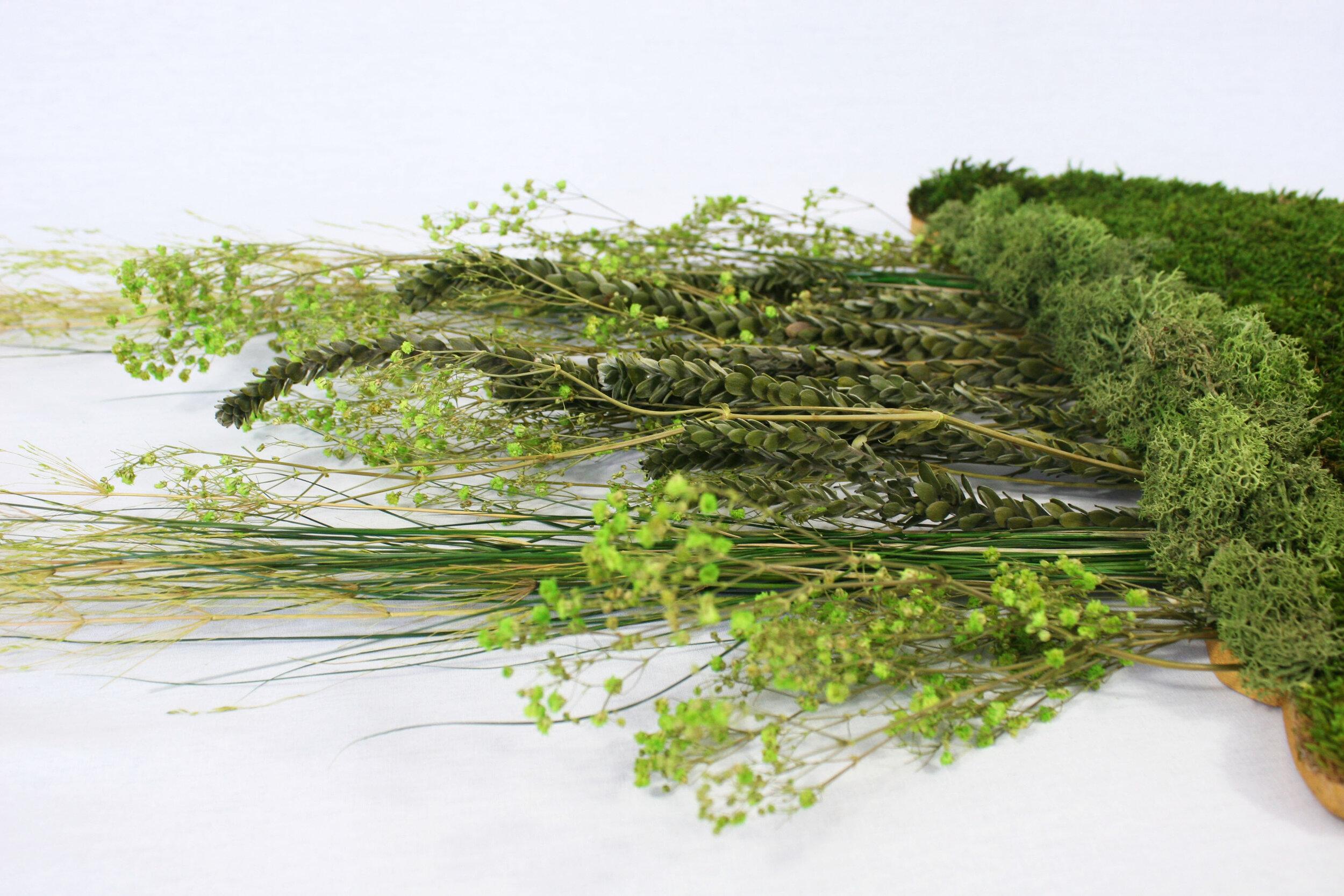 cadre-vegetal-meduse1-silhouette-zoom2-hoai.JPG