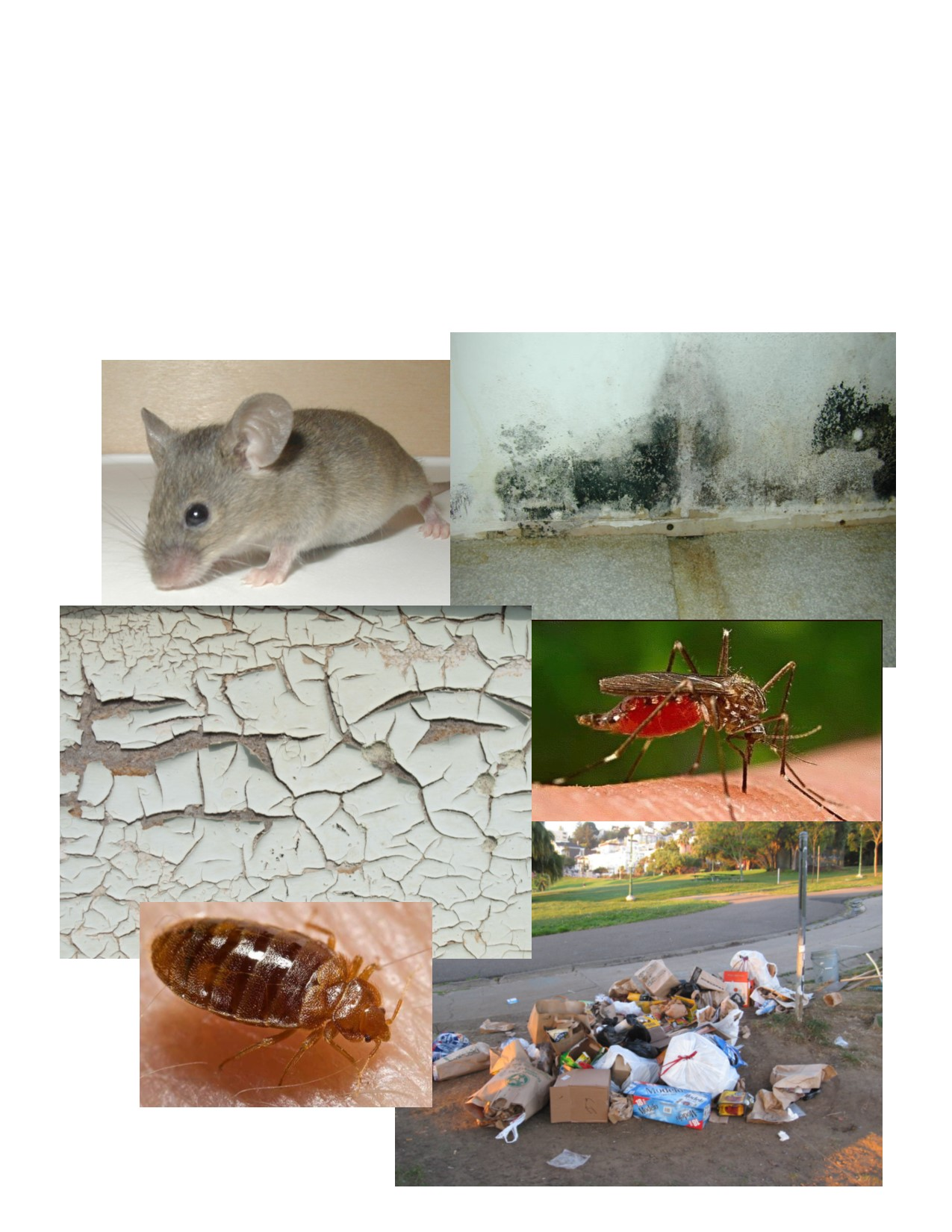 Other environmental health issues we address: - Air and water qualityMold and moisture problemsRadonLead and lead poisoningMosquitoes and areas of stagnant waterRats and mice, trashBedbugsRabiesNo heat issues