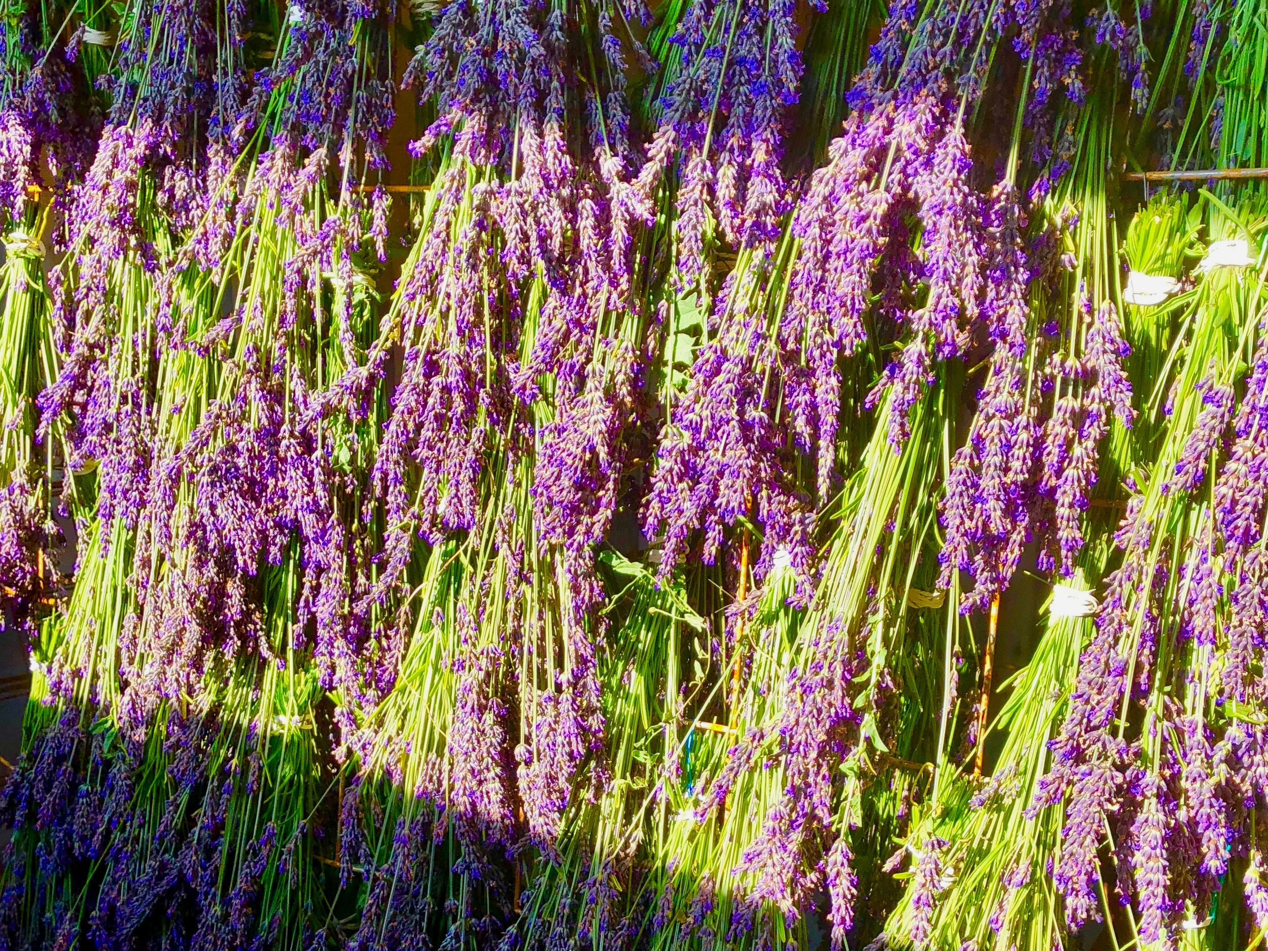 Dried Bunches - Keep Lavender around the house year-round. Use it in dried flower arrangements, to make a craft project, or to ward off insects. There is always room for more lavender.