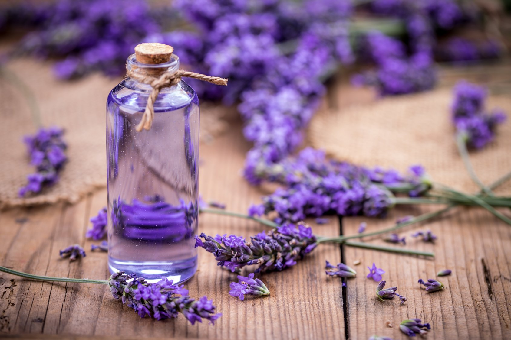 Lavender Essential Oil - Distilled on premises from freshly-cut lavender in order to capture the full complexity and quality of the Lavender's essential oils. Available at the end of July.