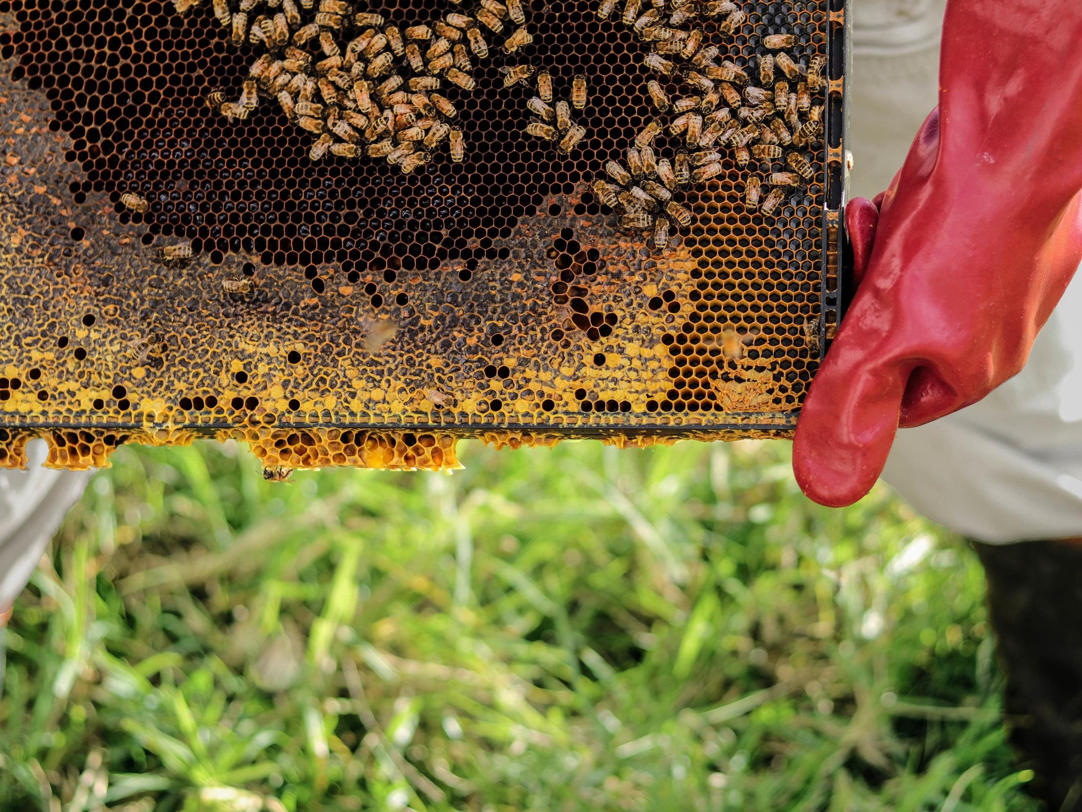 Millefleurs+PEC+honeybee+hives