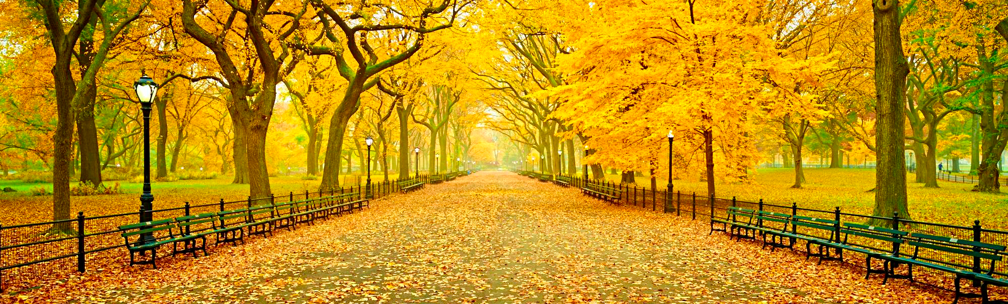 central-park-panoramic-new-york-city-autumn-fall-foliage-literary-walk-tree-lined-mall-high-definition-hd-professional-photography(1).jpg