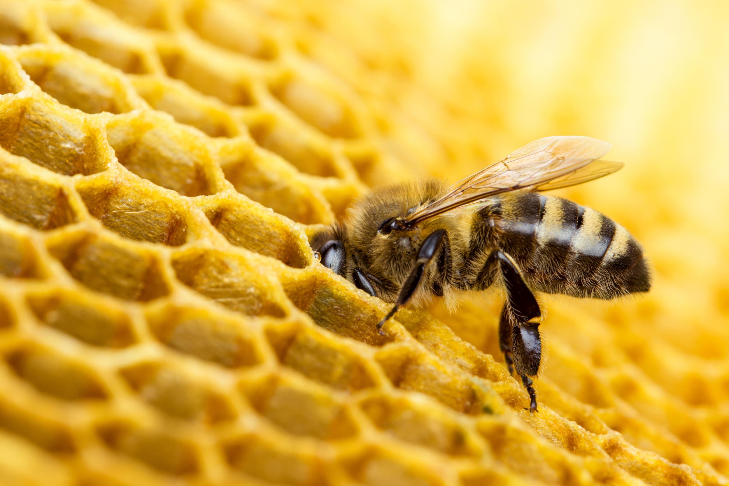 bees 2 AdobeStock_104008368.jpeg