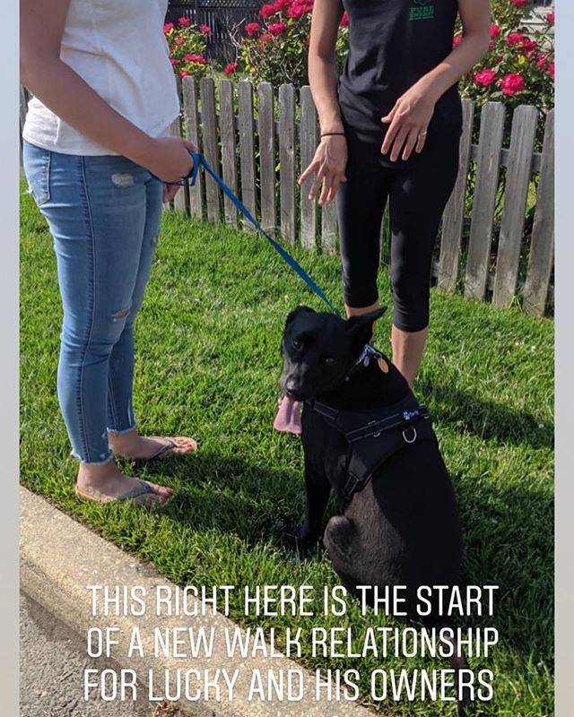 The team has begun private In Home training sessions! Not comfortable leaving your home with your dog? Feel your dog shows more unfortunate behaviors specifically at home? Perfect, we now come to you to help rebuild a new relationship between you and your dog👍🏻 • • • • #PureEnergyDogTraining #PureEnergy #DogTraining #DogTrainer #NJDogTraining #NJDogTrainer #NJ #Dog #Dogs #NewJerseyDogTrainer #NewJerseyDogTraining #DogsOfInstagram #DogOfTheDay #ShelterDog #AdoptDontShop #RescueDog #pit #pits #pitbull #pitbulls #pitbullsofinstagram #pitbulllove #outdoors #nature #explore #adventure #gopro #gsd #germanshepherd