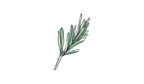 ROSEMARY  Boosts your concentration