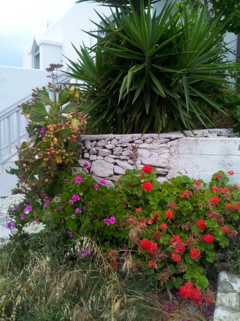 When we reached Mykonos Island, we were greeted by the rich flora