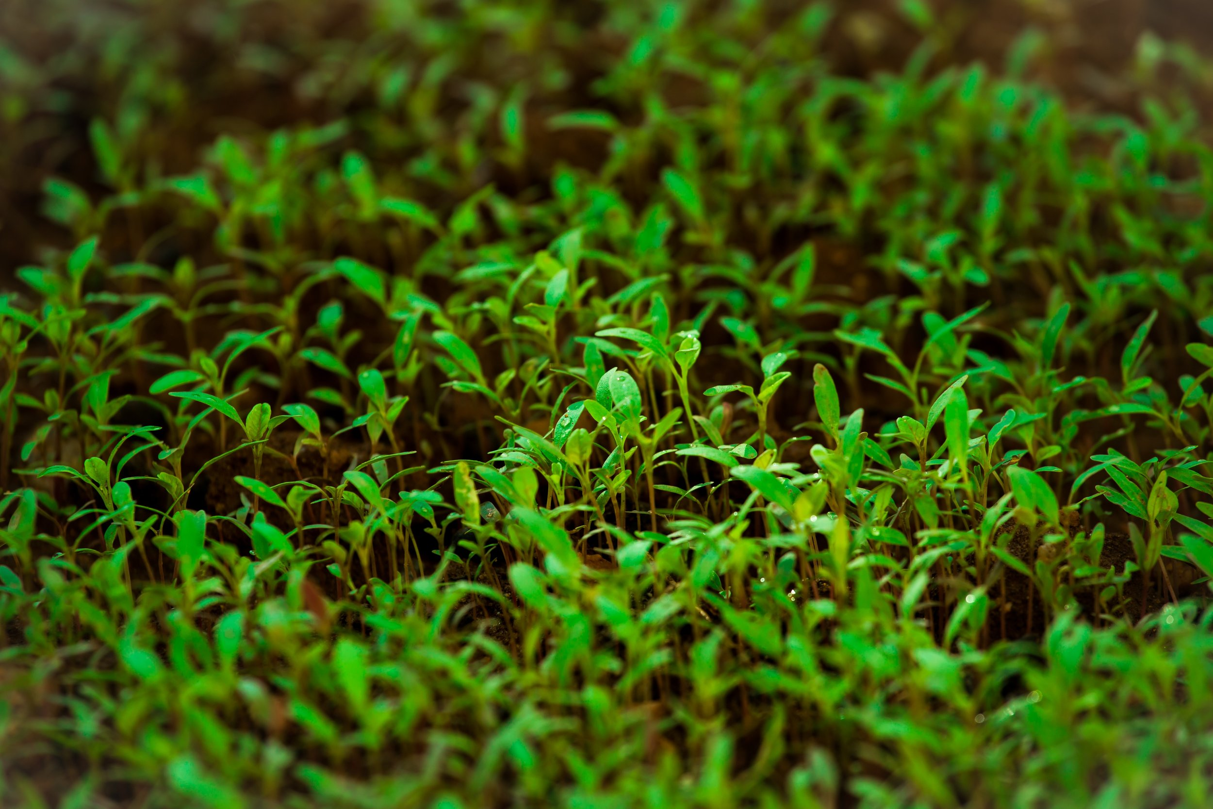 agriculture-biology-blur-740129.jpg