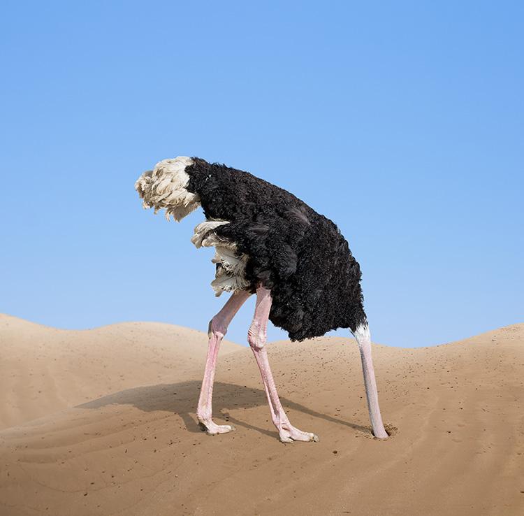 ostrich-head-in-sand.jpg