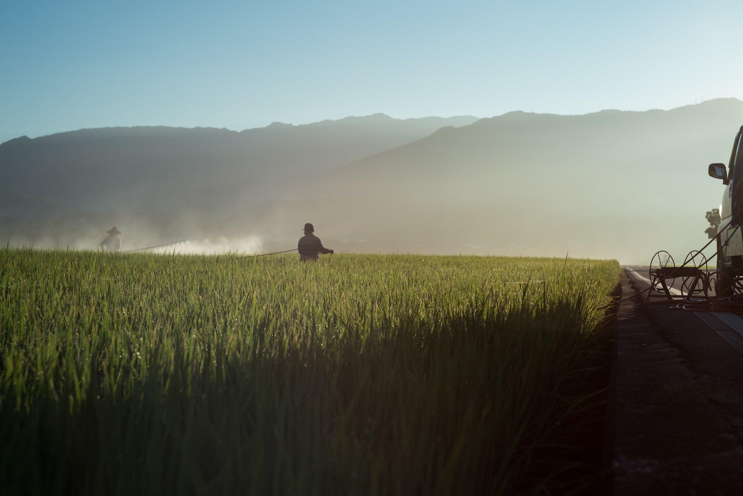 cropland-crops-daylight-1476091.jpg