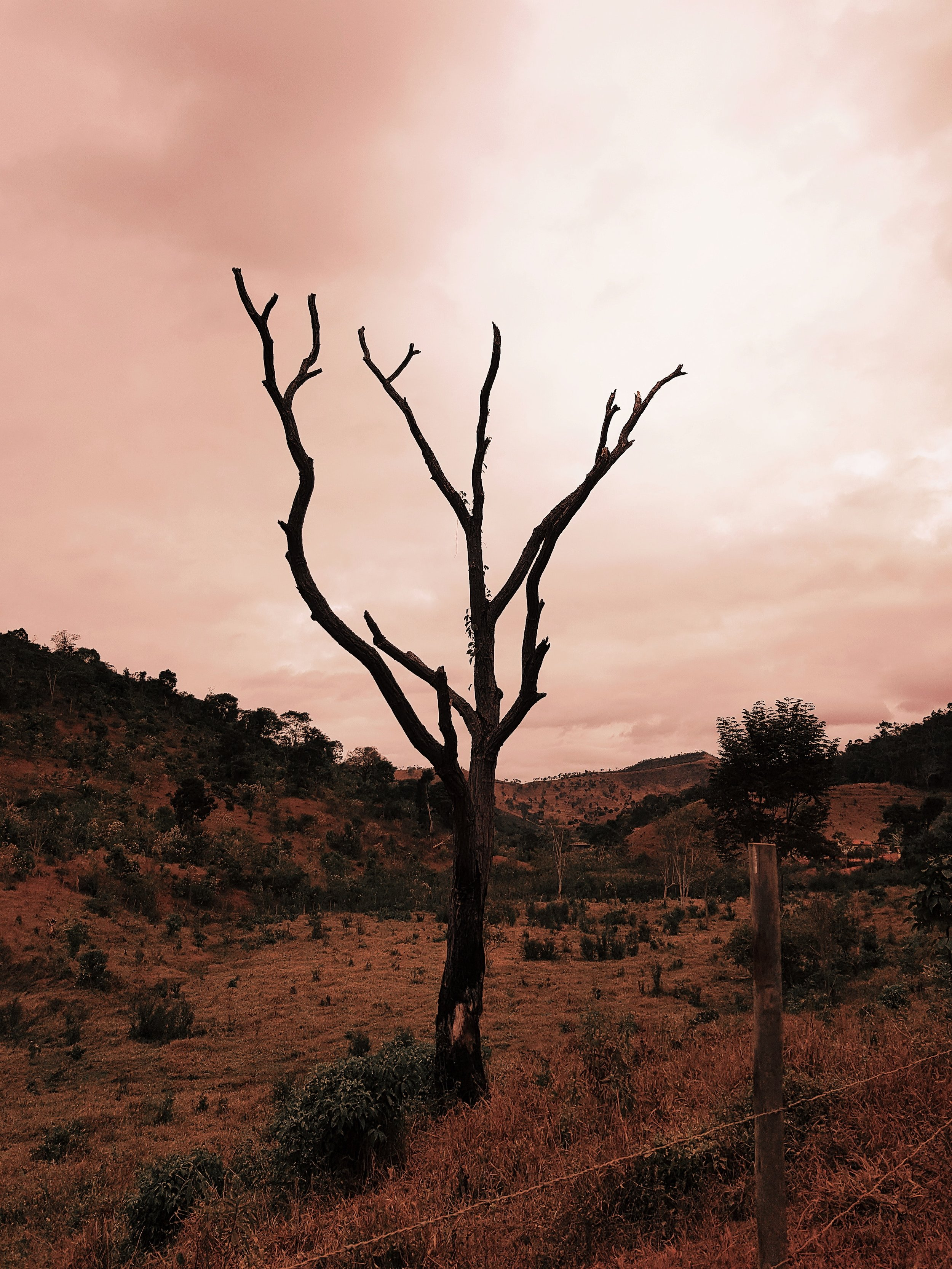 arid-bare-tree-countryside-2764982.jpg
