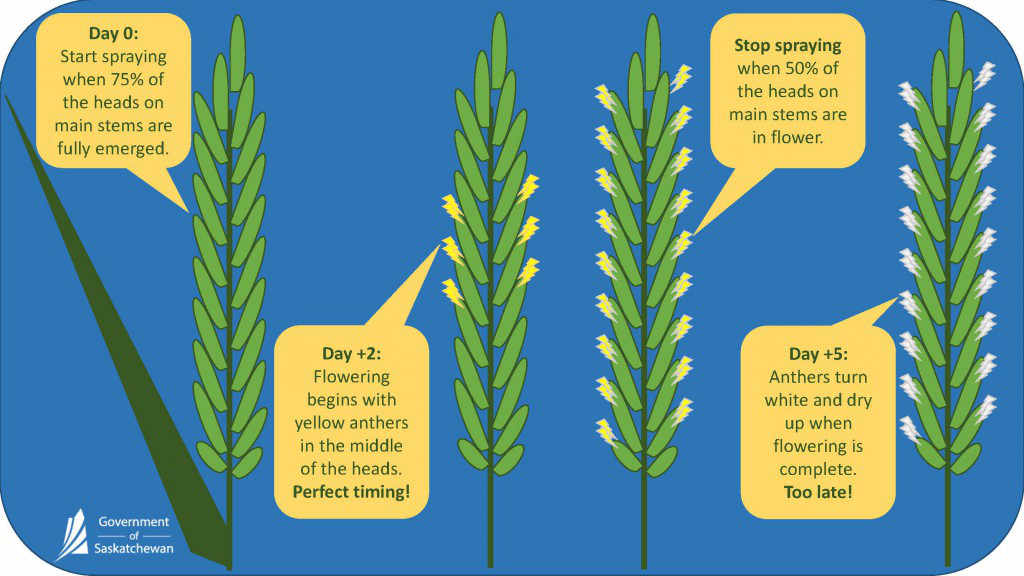 Pages-from-Learn-more-about-fusarium-timing-2.jpg