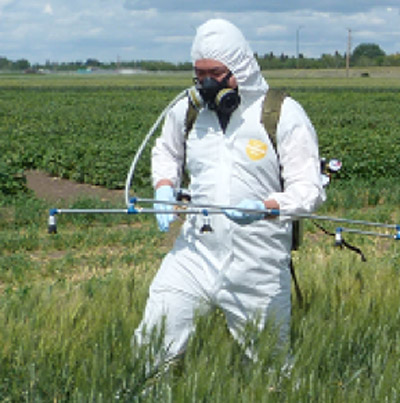 A research technician applies the BCA and chemical pesticide spray to test plots as part of Dr. Vujanovic's research.