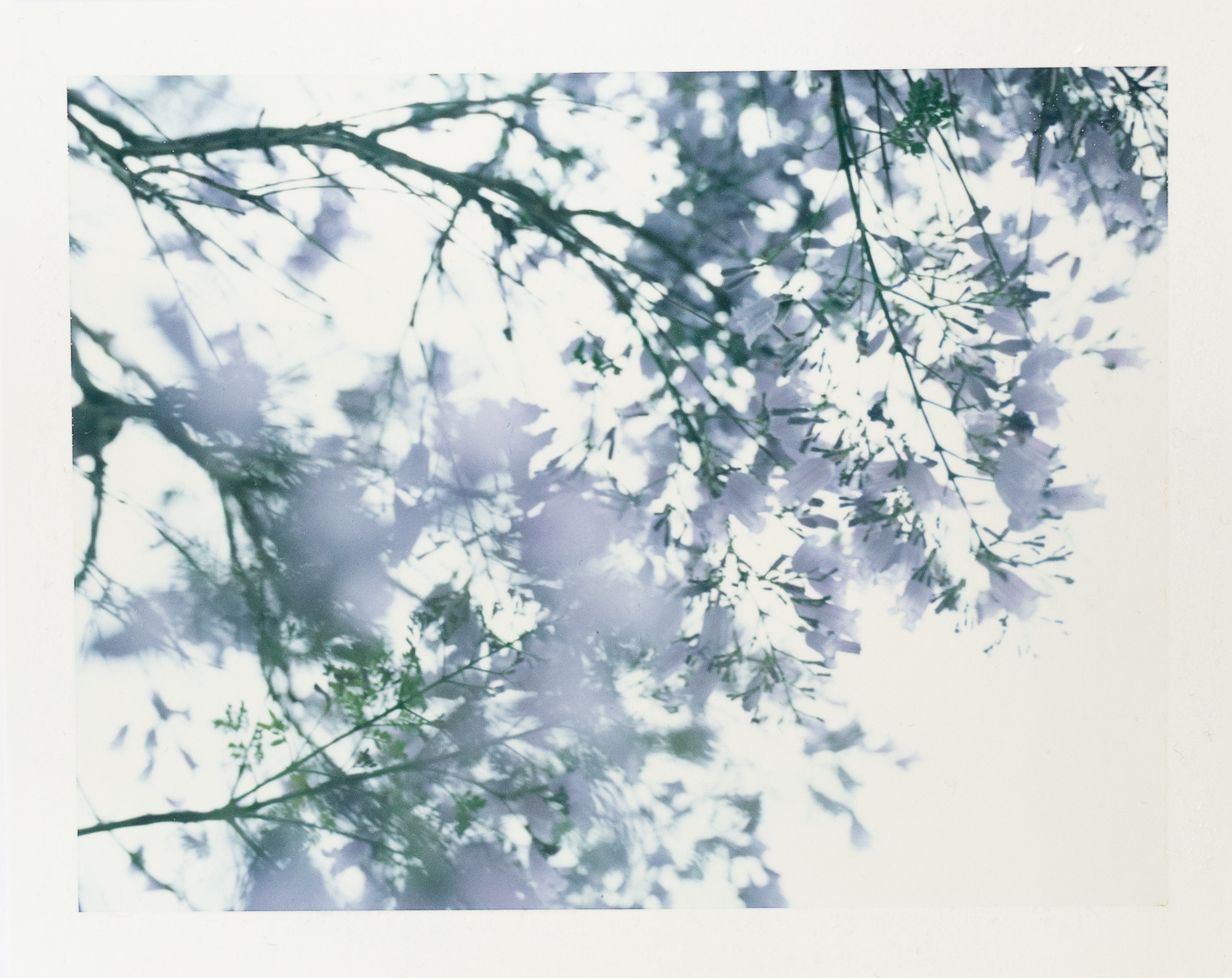 SlowContentStudio_Polaroid_Spring.jpg