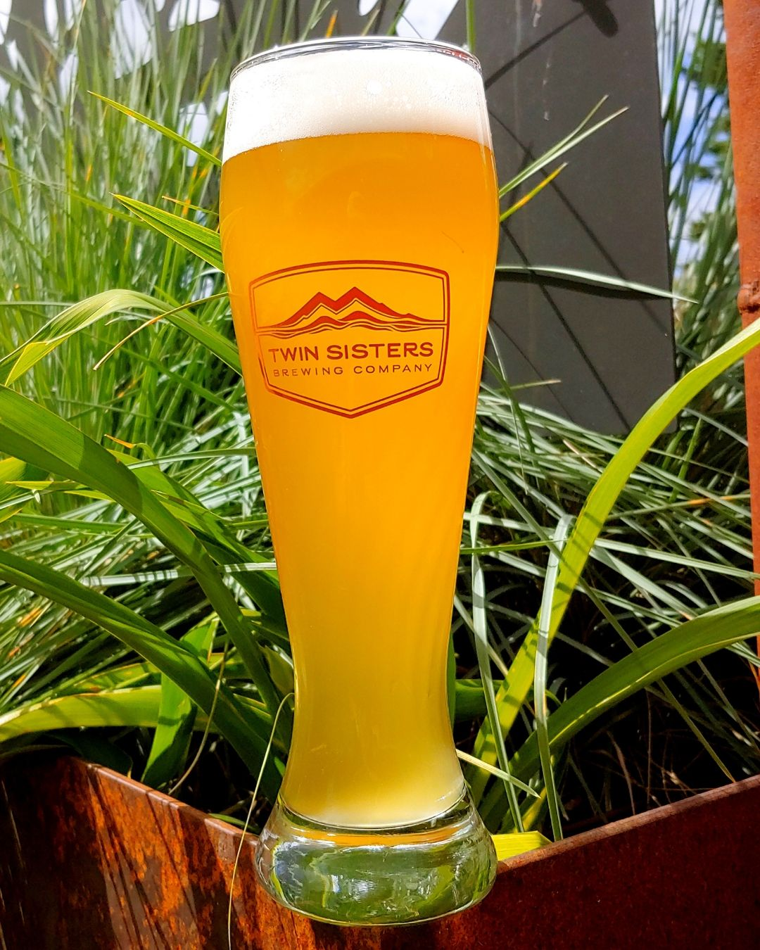 Hugh Hefner Hefeweizen - 5.8% ABV | 18 IBUPerfect for a warm summer afternoon, this brew offers a rounded blend of banana, clove, and bready notes with an underlying tartness. This delicious Hef is a 50/50 Wheat and Barley mix with a tantalizing yeast character. 