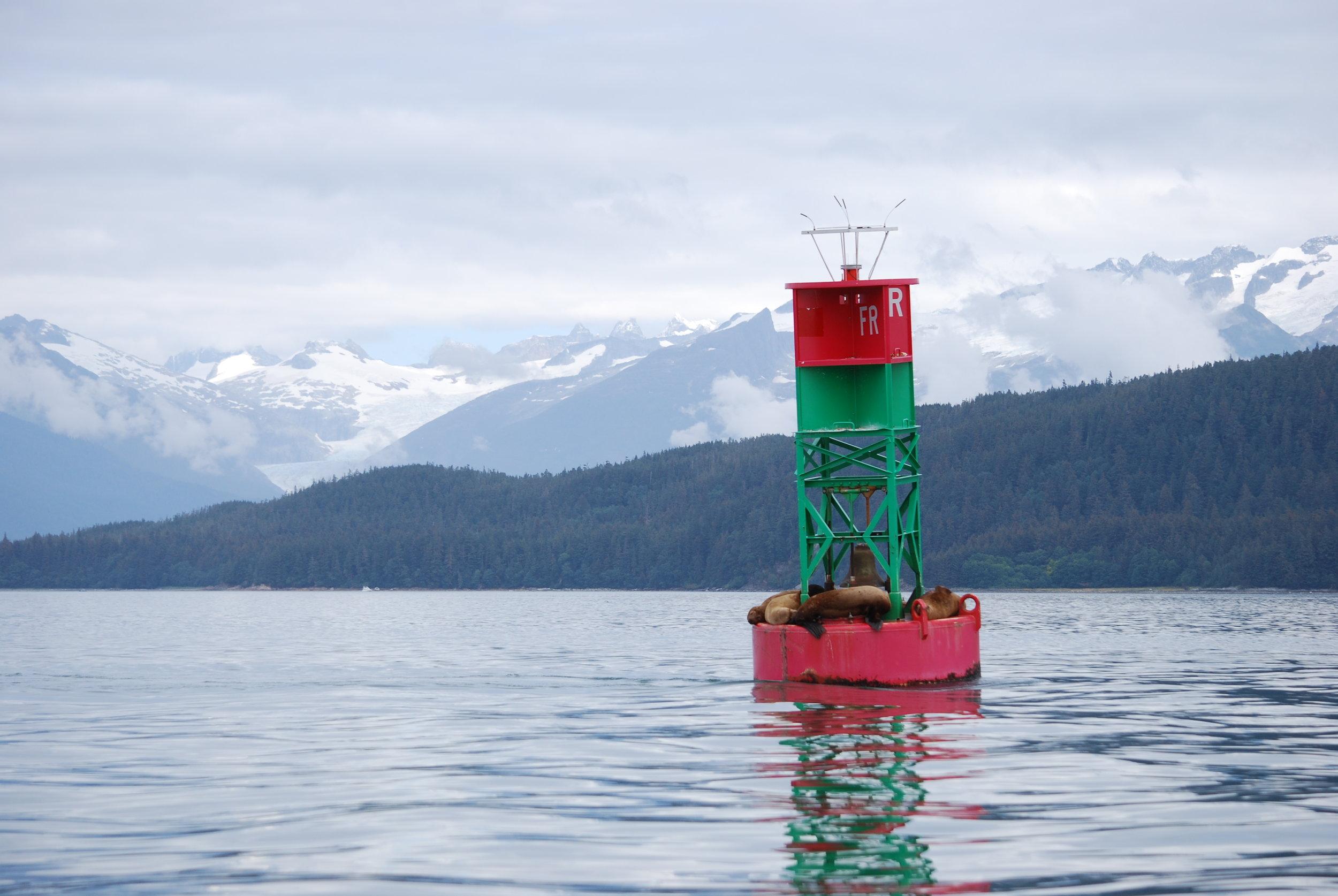 alaska buoy sea  lion.JPG