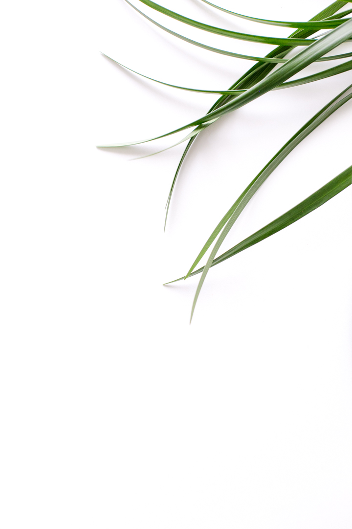 whitespace-plant-marketing-image-Custom-Commercial-Photography-Niagara-Photography-by-Adrienne-Gelbart