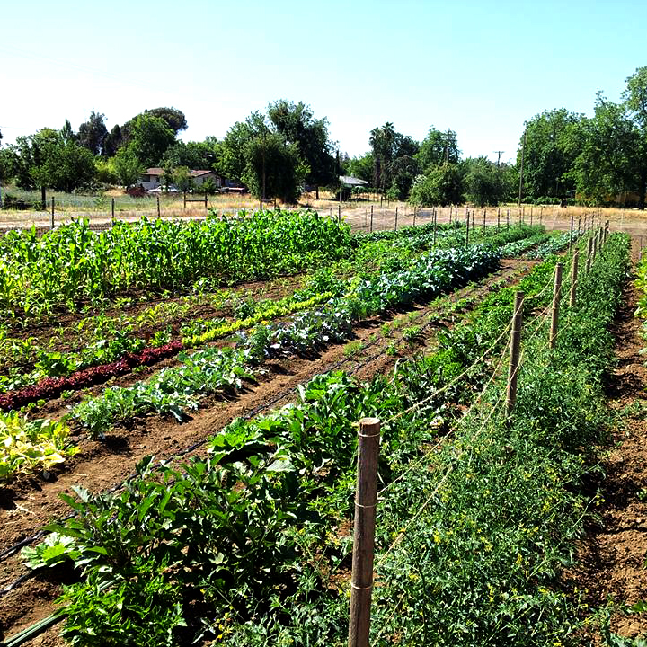 THE GARDEN - Organic produce to your table