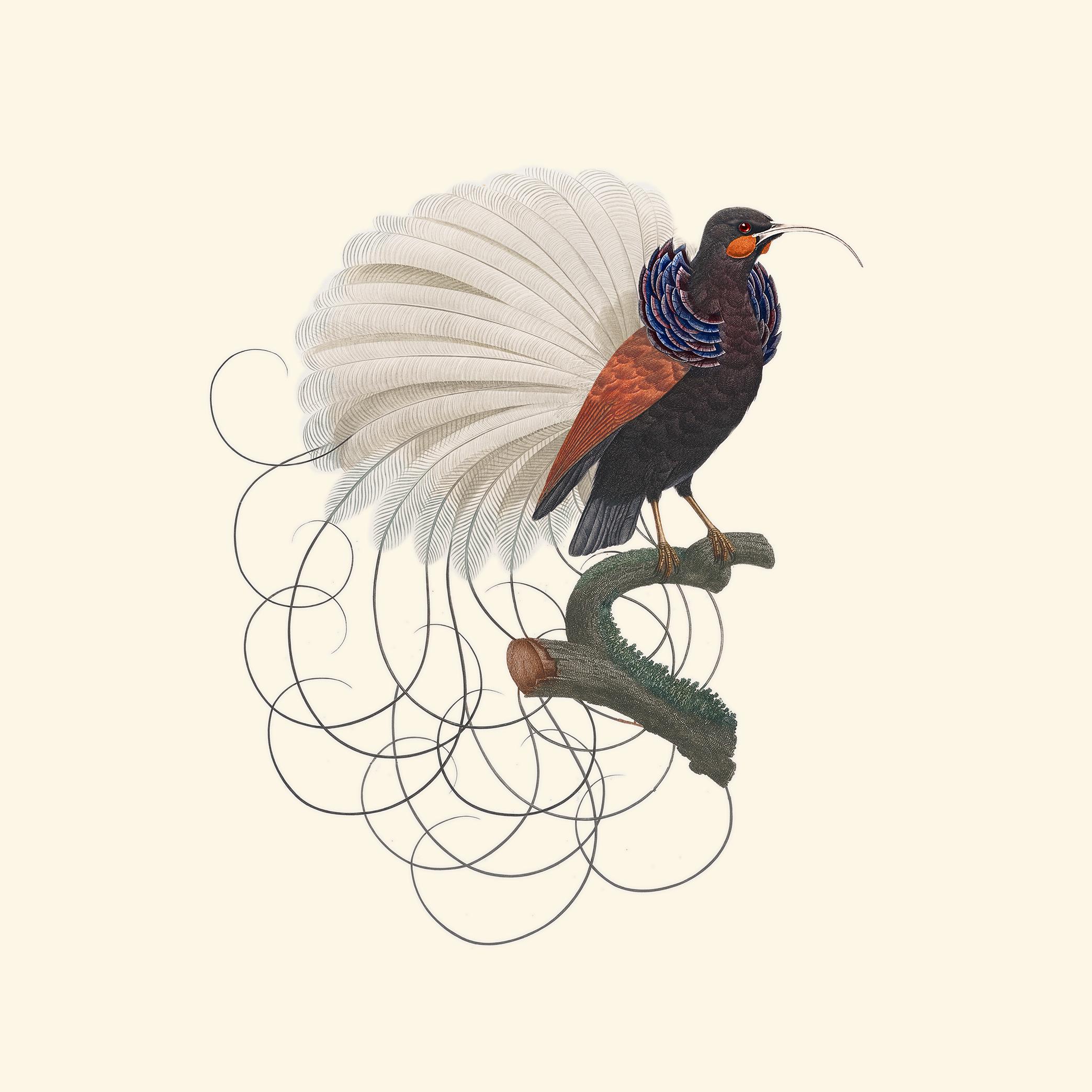 calligraphybird.jpg