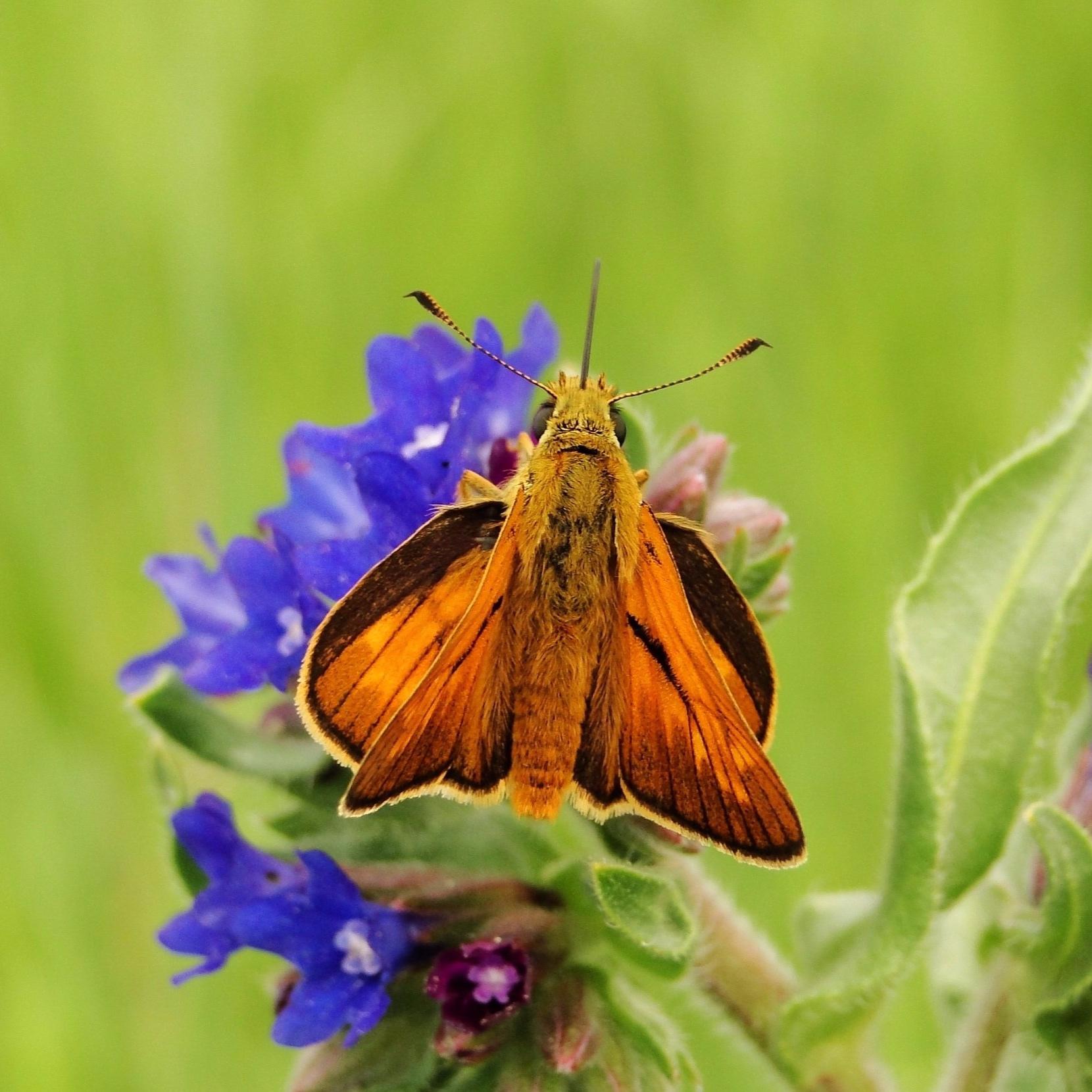 Invertebrates -