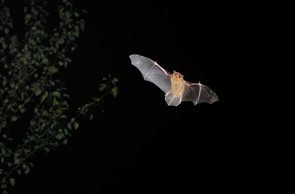Bats -