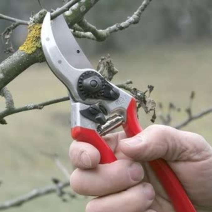 Felco Professional Secateurs - £49.95