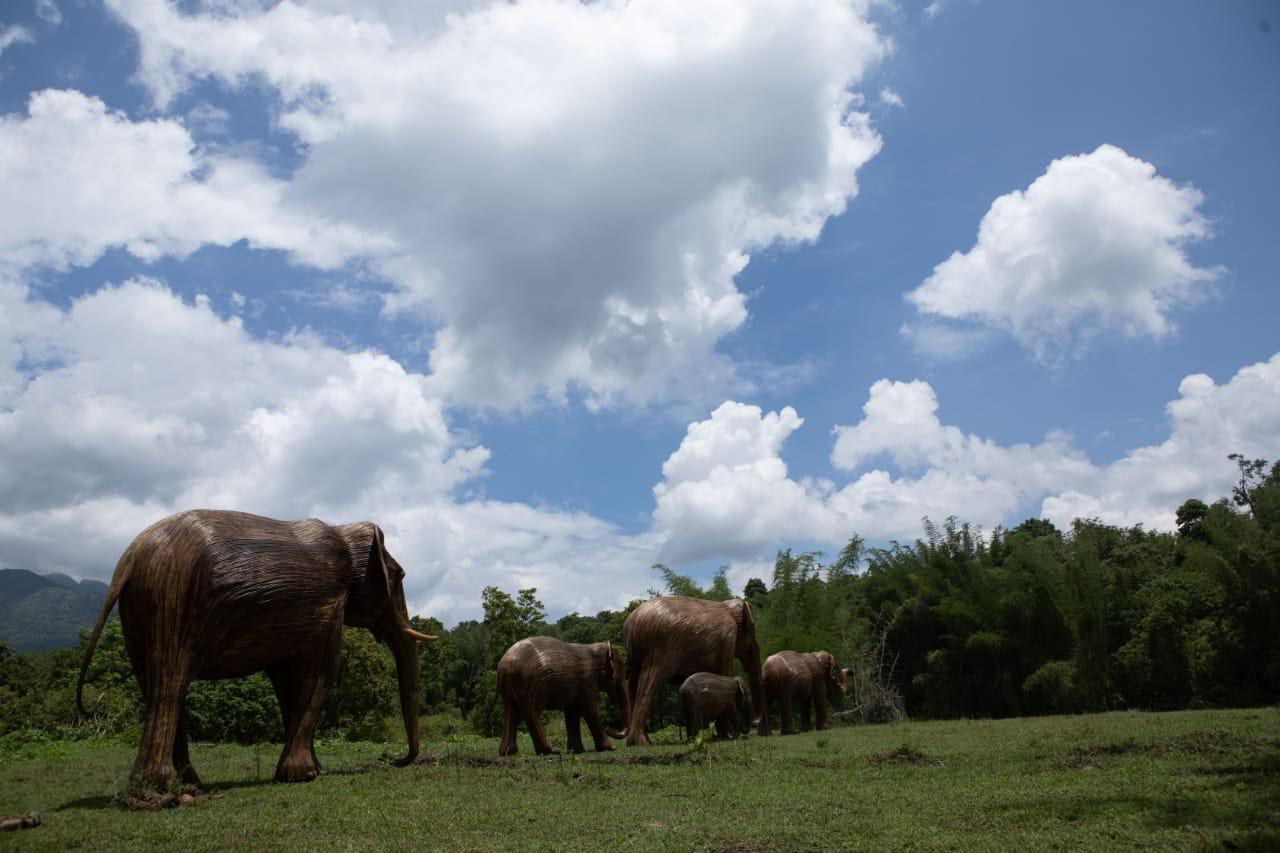 News - From greater one-horned rhinos in Nepal destroying crops, to orangutans in Indonesian oil palm plantations, to elephants raiding crops throughout rural India and leopards attacking livestock – human-wildlife conflict is prevalent across Asia and happens every single day. But not all of it is reported…Read more