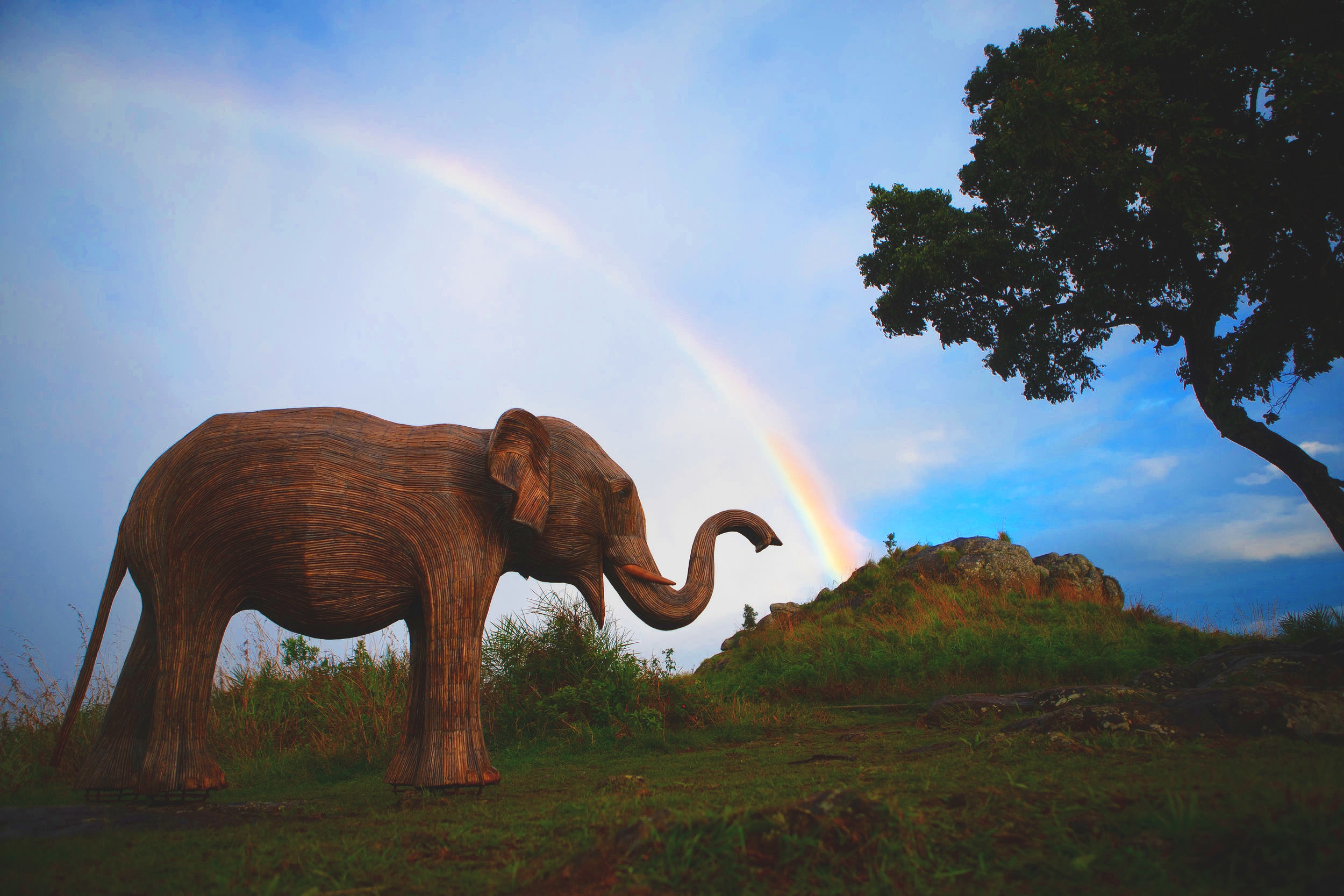JOIN THE CALL OF THE WILD - Help us achieve our target to create a world where wild animals and humans live side by side.Fundraise with an Elephant Tea PartyMigrate with us in the USACommission an Elephant Sculpture