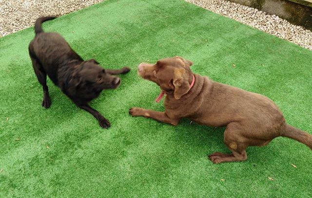 Missy & fudge having so much fun together ☺️