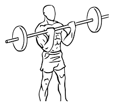 barbell bicep curl.png