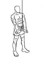 Triceps-pushdown-with-rope-2 - Edited.png