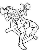 incline-dumbbell-bench-press.jpeg