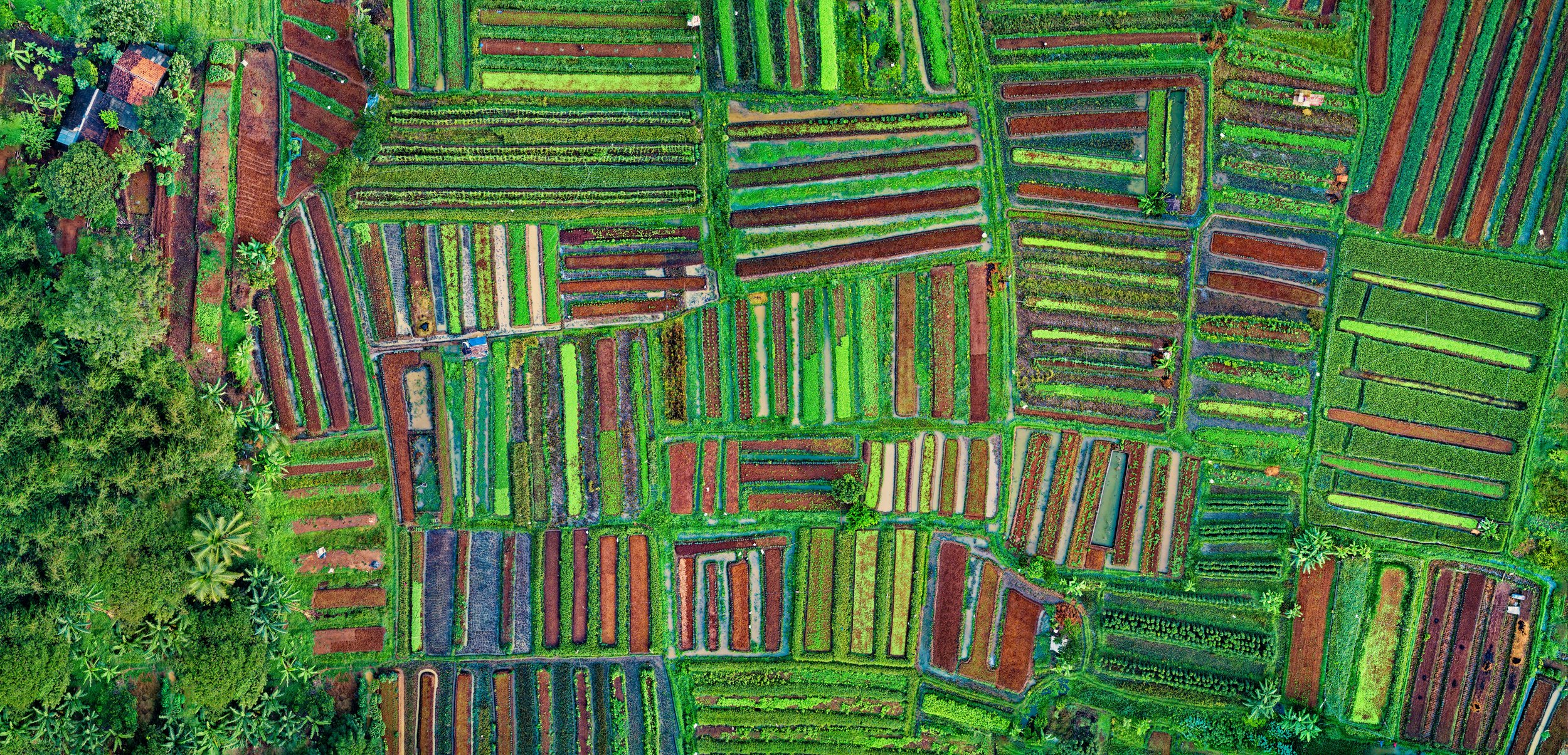aerial-aerial-shot-agriculture-1567791.jpg