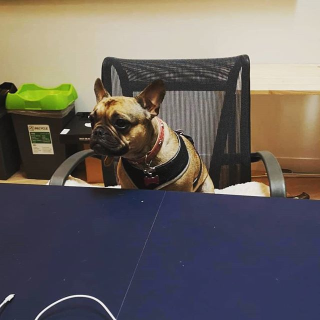 We love the office dogs at our new digs! #wework #eyeoniris #officedogs
