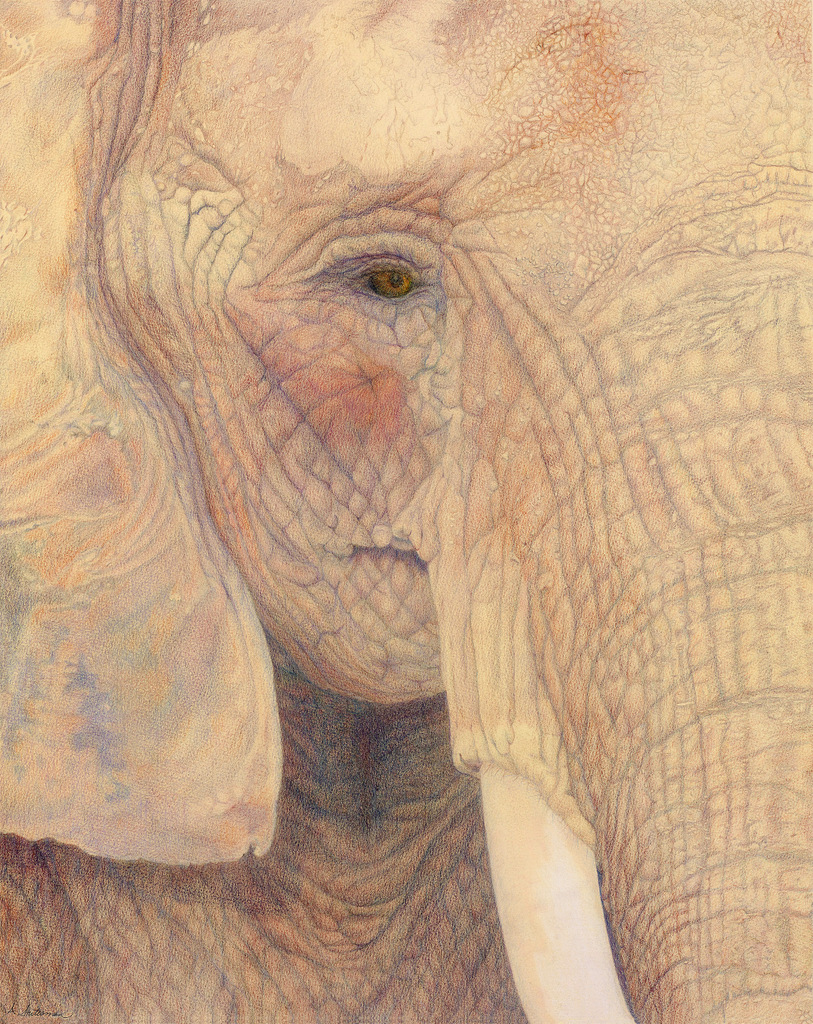 """""""OLD SOUL"""",  Color Pencil on Arches Paper,  20x15 inches,  SOLD"""