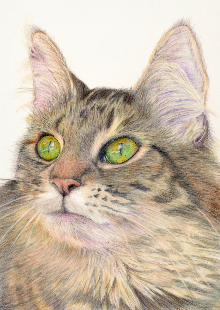"""KITTY"",  Color Pencil on Drafting Film,  8x10 inches,   IN PRIVATE COLLECTION"