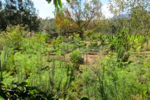 Medicinal teaching garden at AFOPADI site.