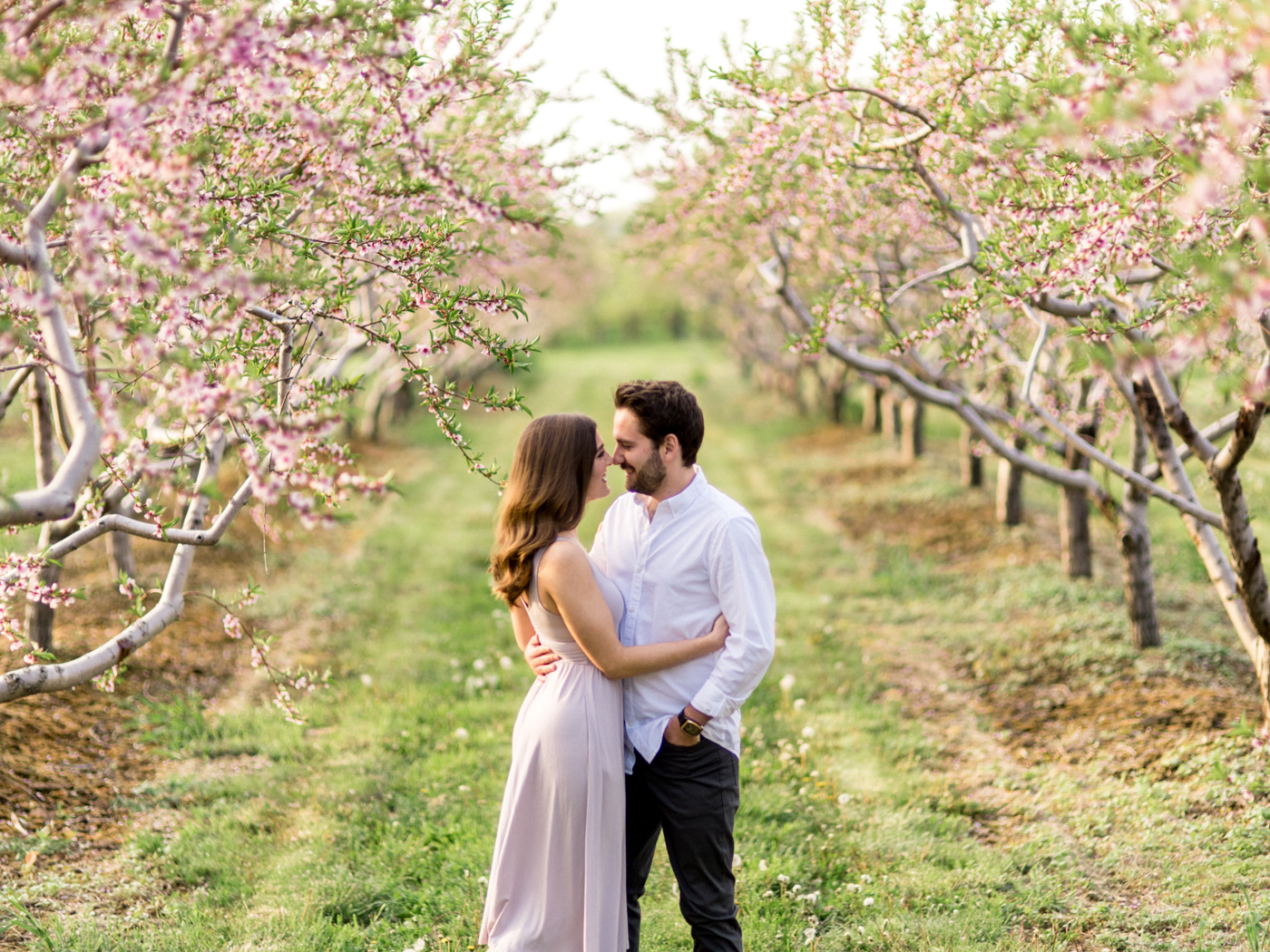 Chris & Heather's Engagement Session in Vineland Ontario Spring Blossoms Trees by Hush Hush Photography & Film Aidan Hennebry - 14.jpg
