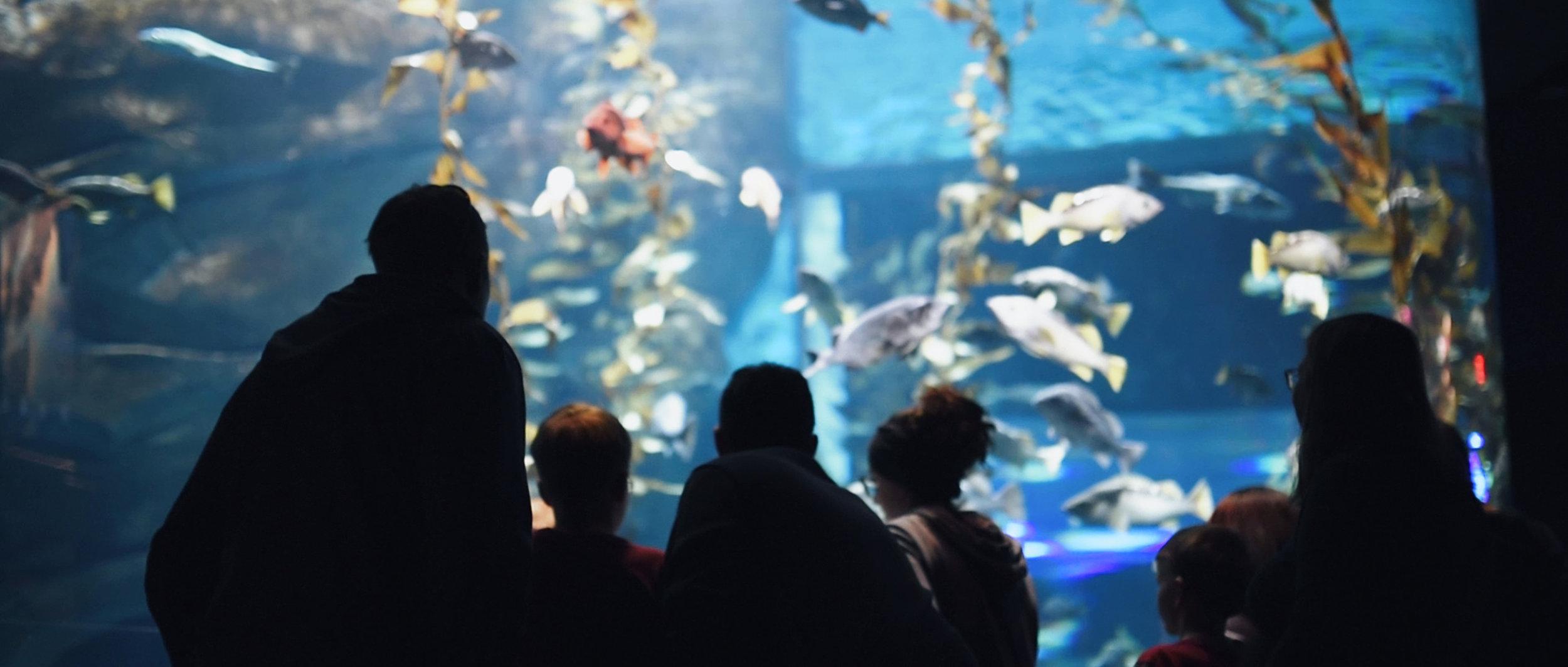 Ripley's Aquarium Film.00_01_29_11.Still006.jpg